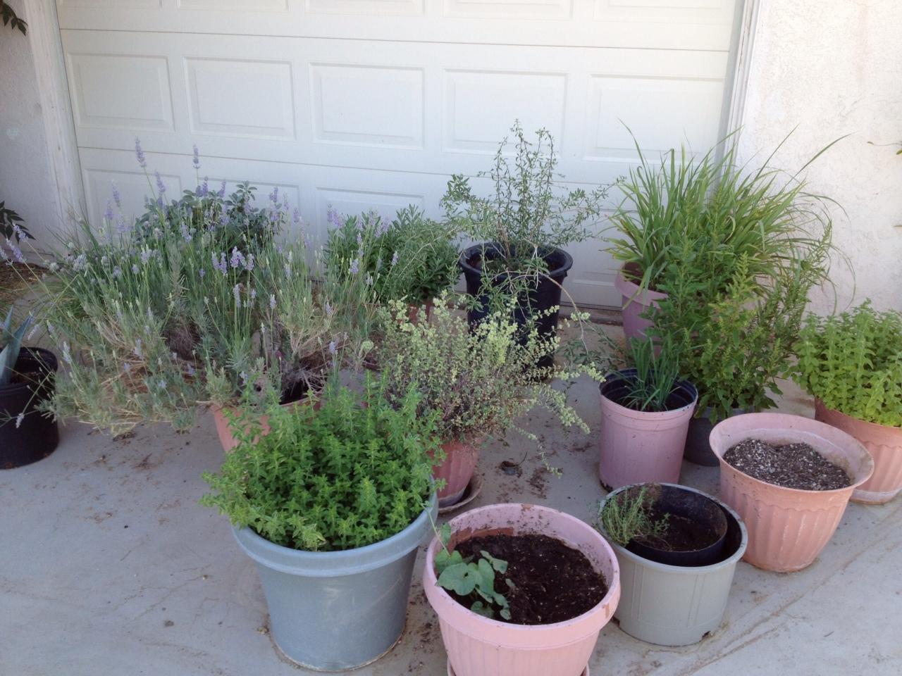 Janet herbs
