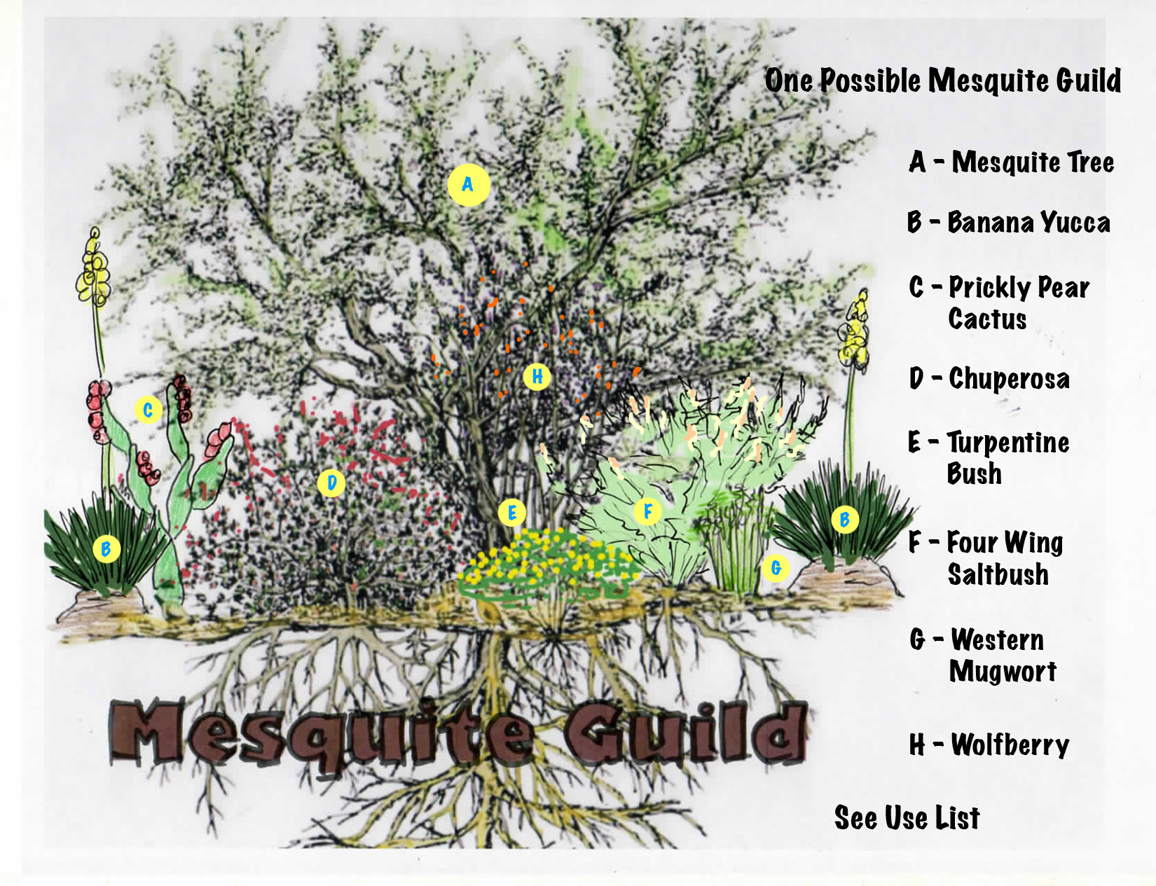 5.local mesquite guild