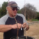 Orchard owner, Don Fitzgerald demonstrates grafting.