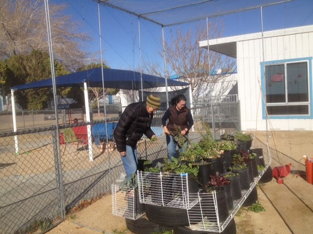 Spider and Deb repotting plants in the howling wind!